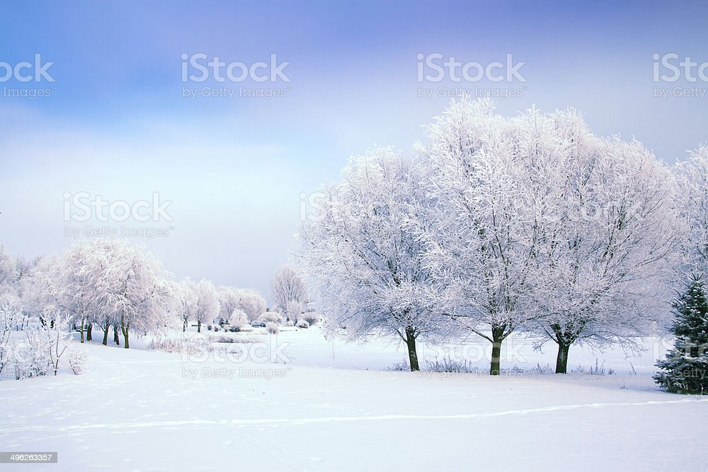 Winter's Tale royalty-free stock photo