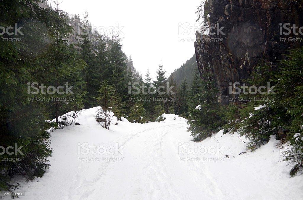 Winterscape  foto de stock libre de derechos