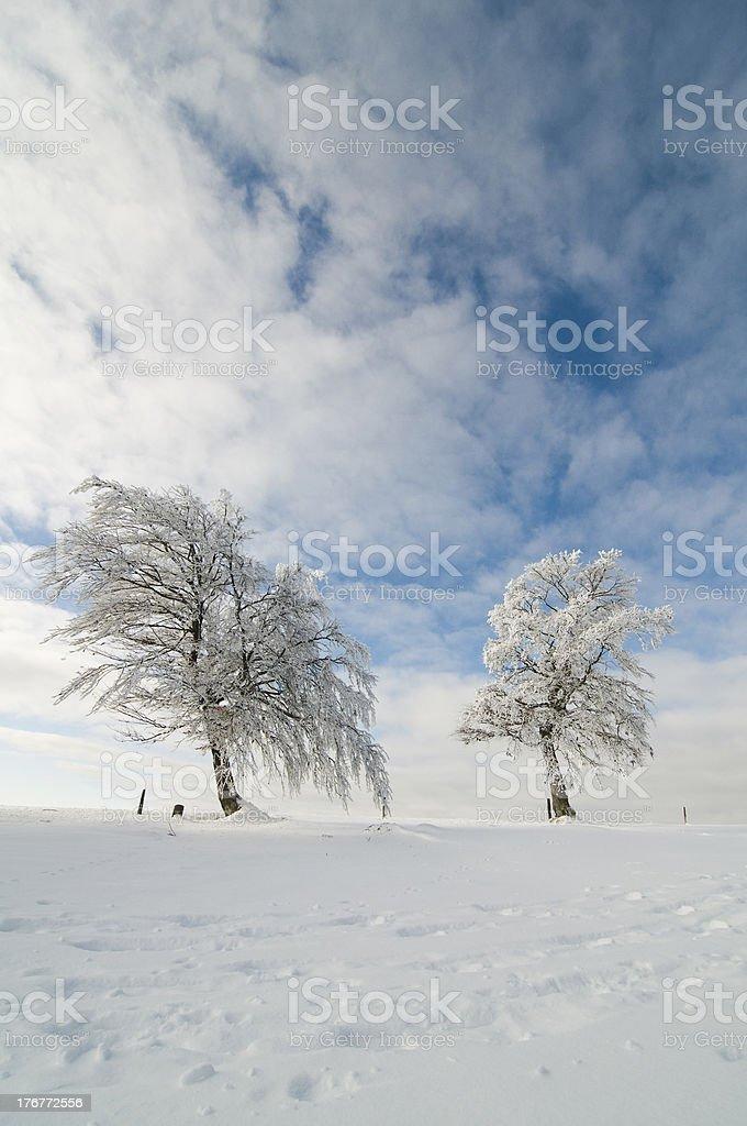 wintersky – Foto