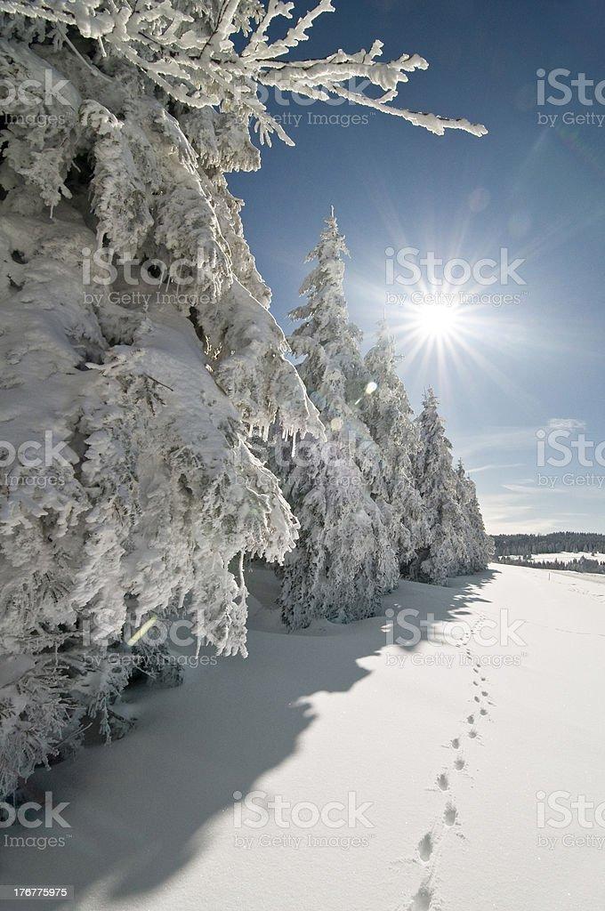 Wintersun – Foto