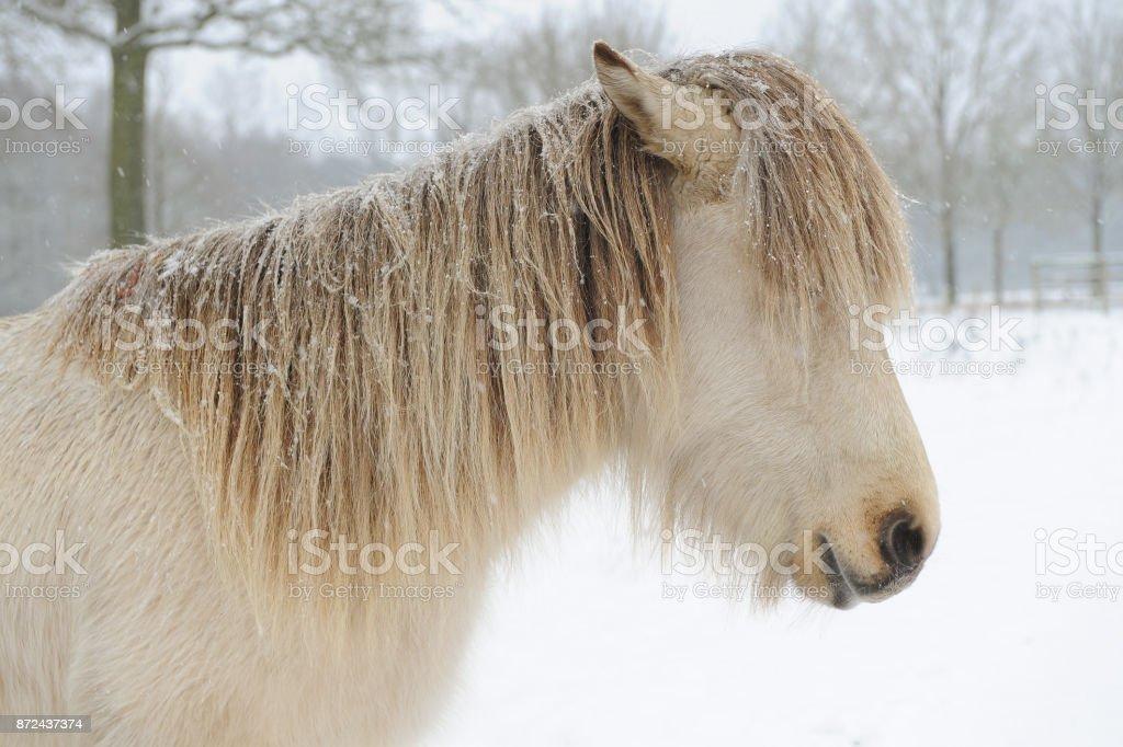 Winter in den Niederlanden: Tiere im Schnee – Foto