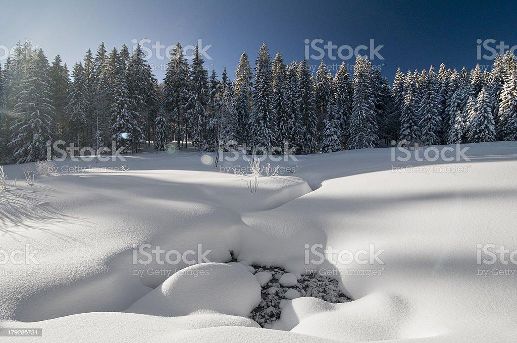 Im Winter – Foto