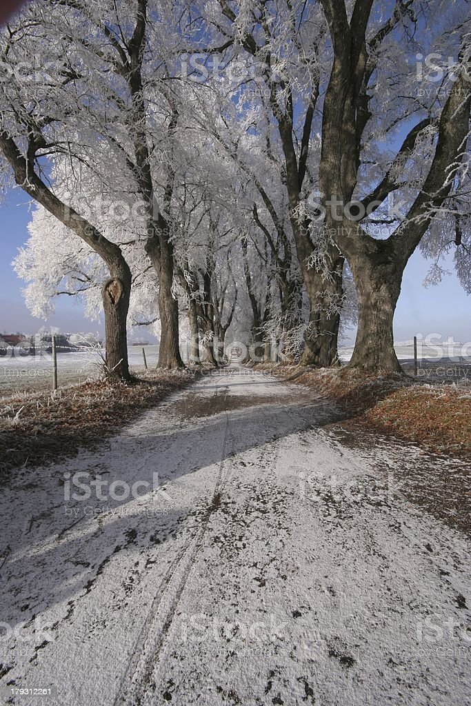 Winterwonderland2 royalty-free stock photo