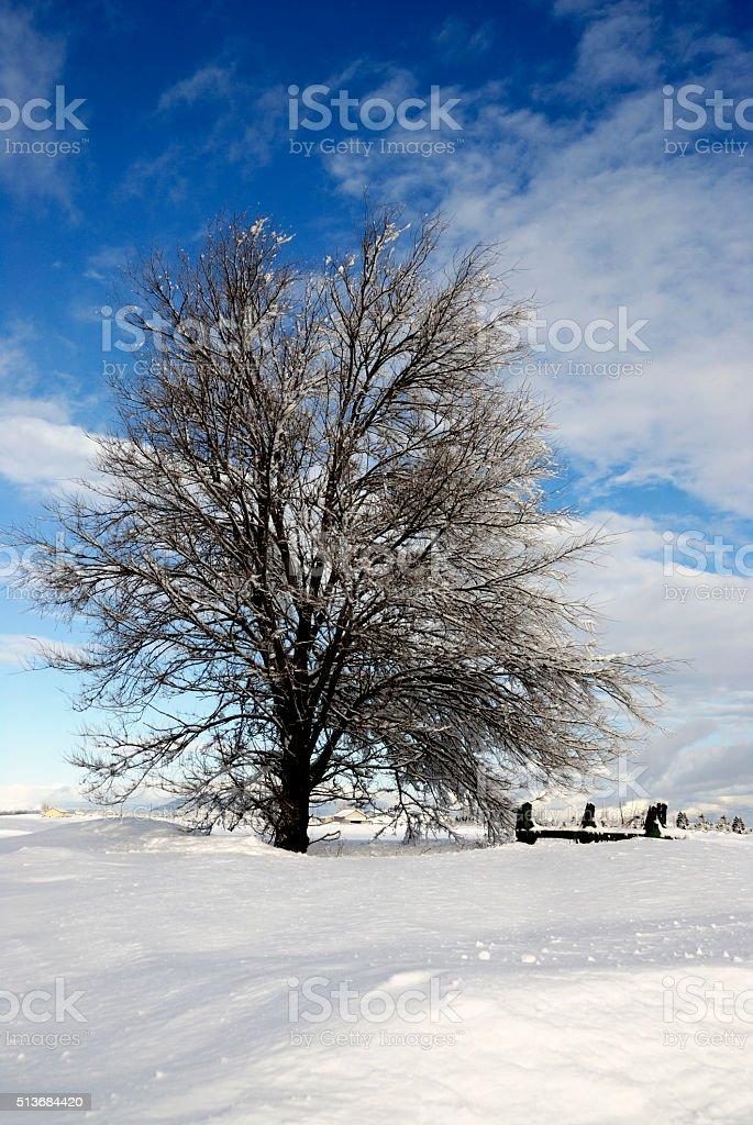 Wintery Prairie Scene stock photo