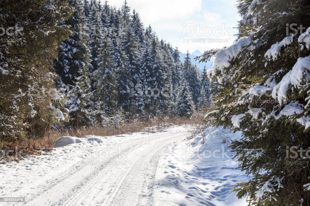 Wintery Snowy Path With Trees In Stubai Alps Mountains Austria Stock