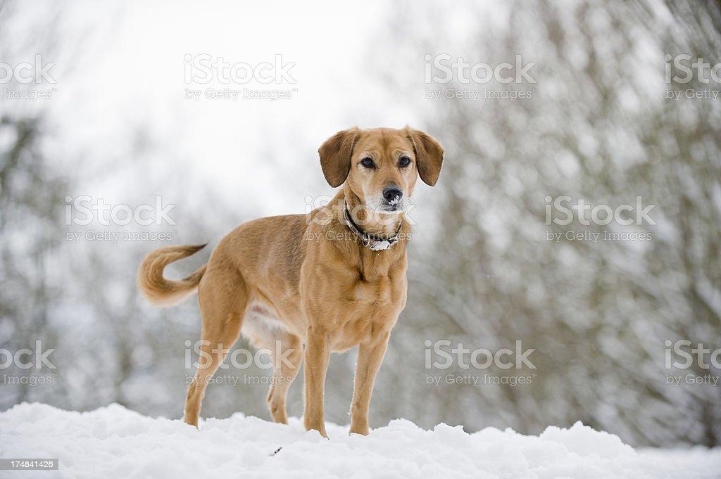 Wintery Walk in England royalty-free stock photo