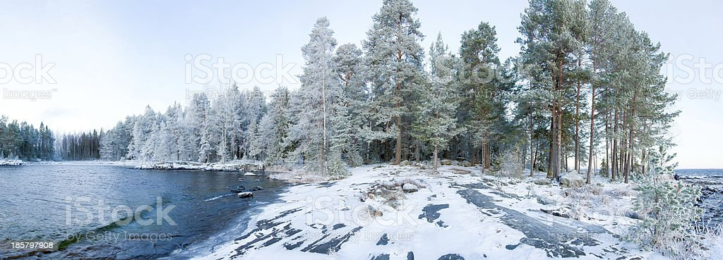 Wintry forest near lake panorama royalty-free stock photo