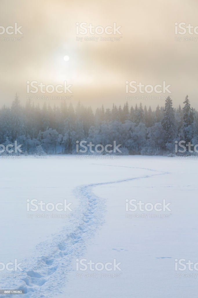 Wintry landscape view with tracks in the snow to the forest stock photo