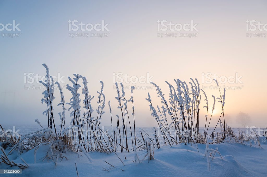 Wintry misty sunset with snowy fields and frosty reeds stock photo