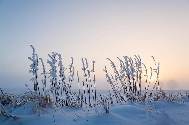 wintry misty sunset with snowy fields and frosty reeds - skåne bildbanksfoton och bilder