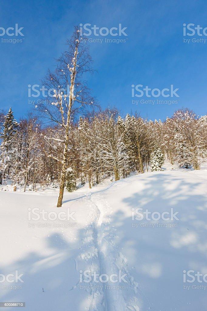 Local Polar foto de stock royalty-free