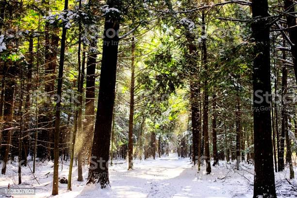 Photo of wintry scene ans sunlight beams in new england