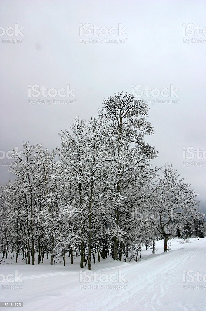 Wintry Trees royalty-free stock photo
