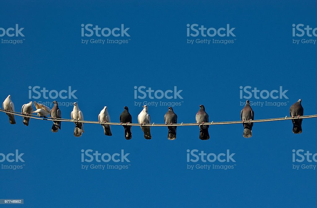 Wire Birds stock photo