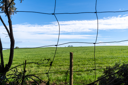 Wire fence, beyond which is a field of green pasture