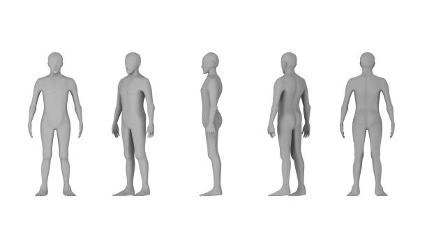 wire frame of human bodies. polygonal model on white background. artificial intelligence concept, 3d illustration - human body 3d stock photos and pictures