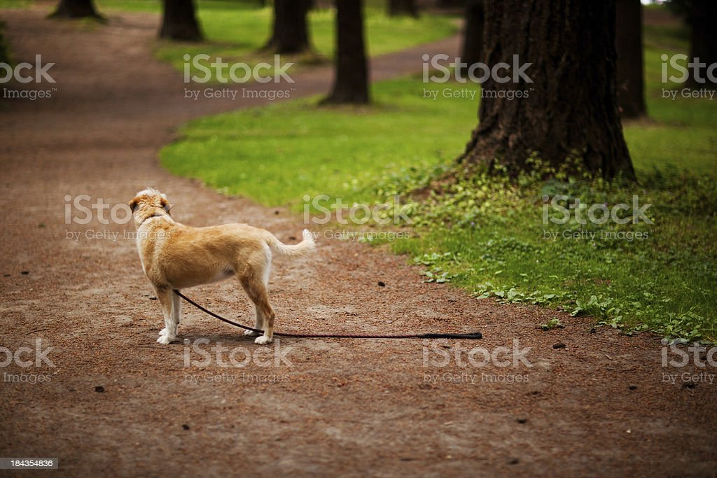 Wire haired terrier mix breed stock photo