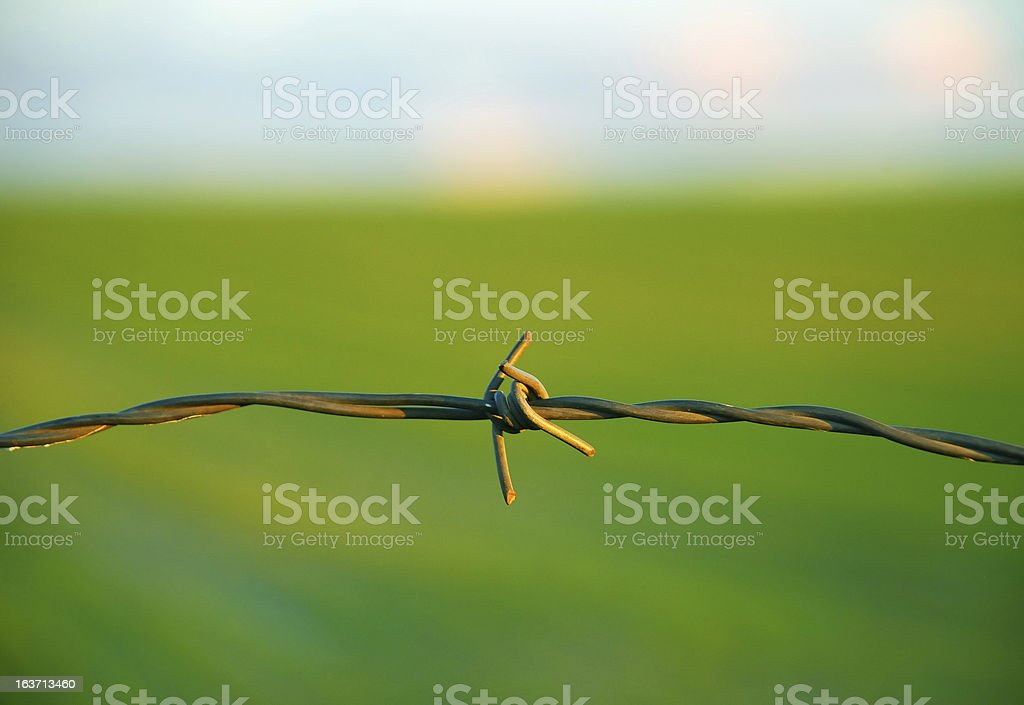 Wire in the field royalty-free stock photo