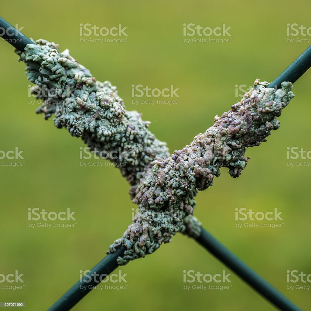 Wire mesh lichens II stock photo