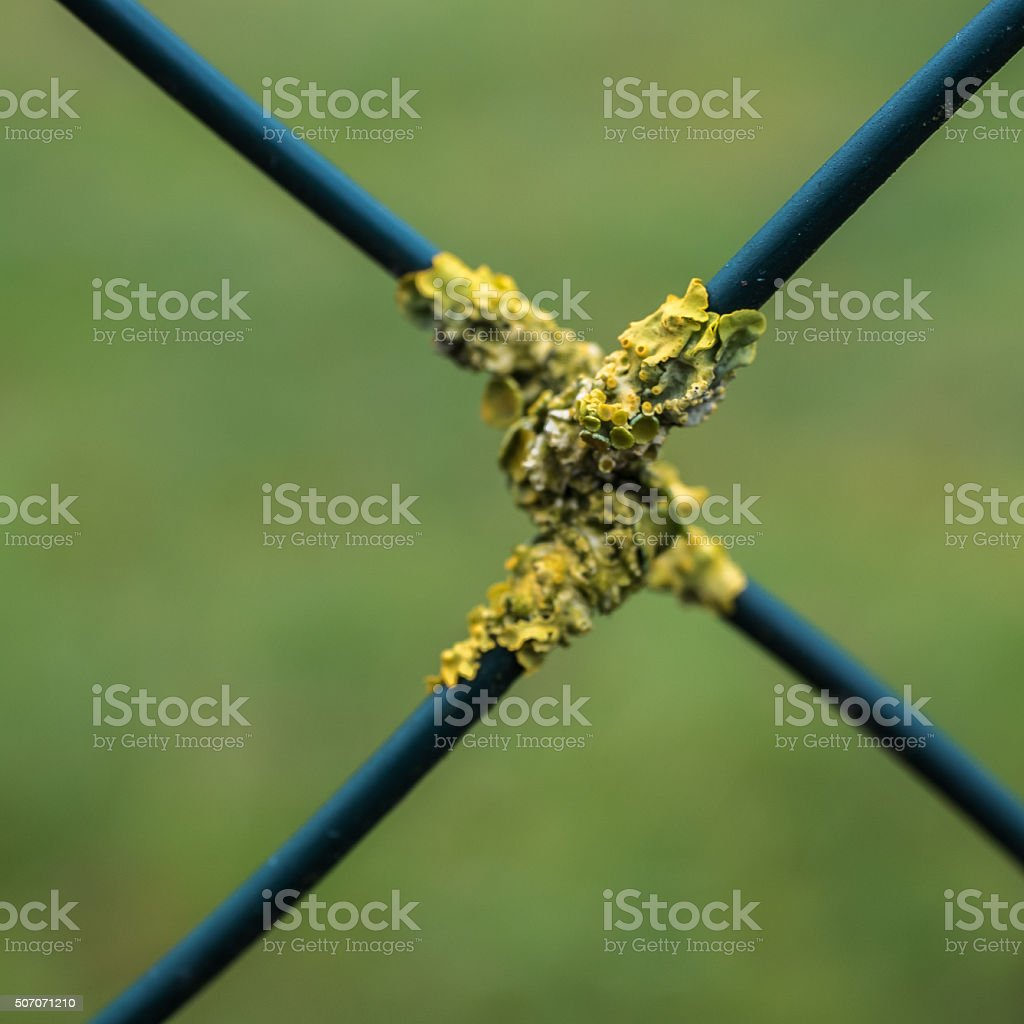 Wire mesh lichens stock photo