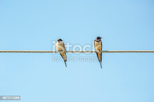 istock wire 667074088