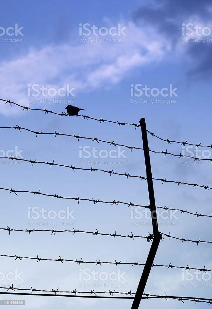 wired fence with barbed stock photo