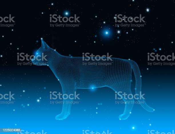 Wireframe cat in a dark space with stars constellation 3d picture id1225024083?b=1&k=6&m=1225024083&s=612x612&h=j dfdahtqln nfbc1s7cg4vx9 fr kxx ggjo1 uuu8=