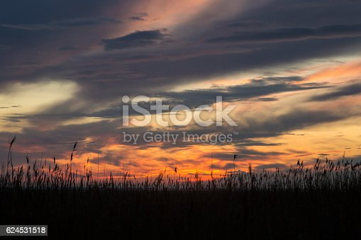 A dramatic sunset sky is viewed through a bed of tall Reeds at Red Rocks on The Wirral