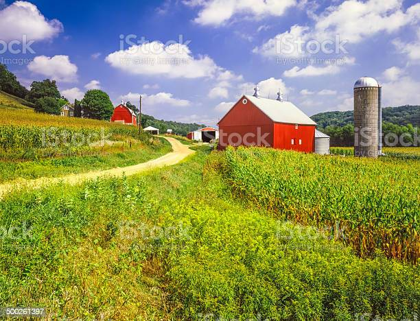 Wisconsin Farm And Corn Field Stock Photo - Download Image Now