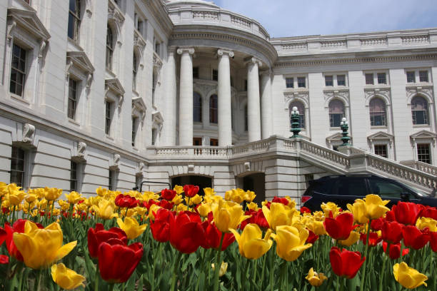 Wisconsin State Capitol building, hystorical landmark. Wisconsin State Capitol building spring view with flower bed with bright tulips on a foreground. City of Madison, the capital city of Wisconsin, Midwest USA. dane county stock pictures, royalty-free photos & images