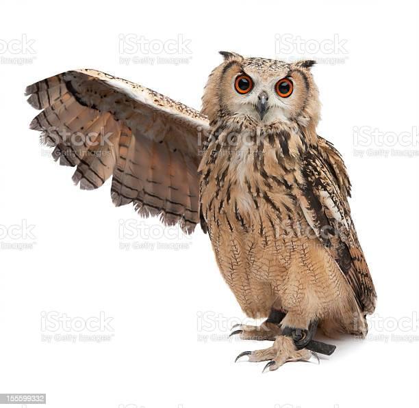 Wise owl picture id155599332?b=1&k=6&m=155599332&s=612x612&h=kk52lmgxaisynk oswwlq7z86vafnqlko2bnptboxzm=