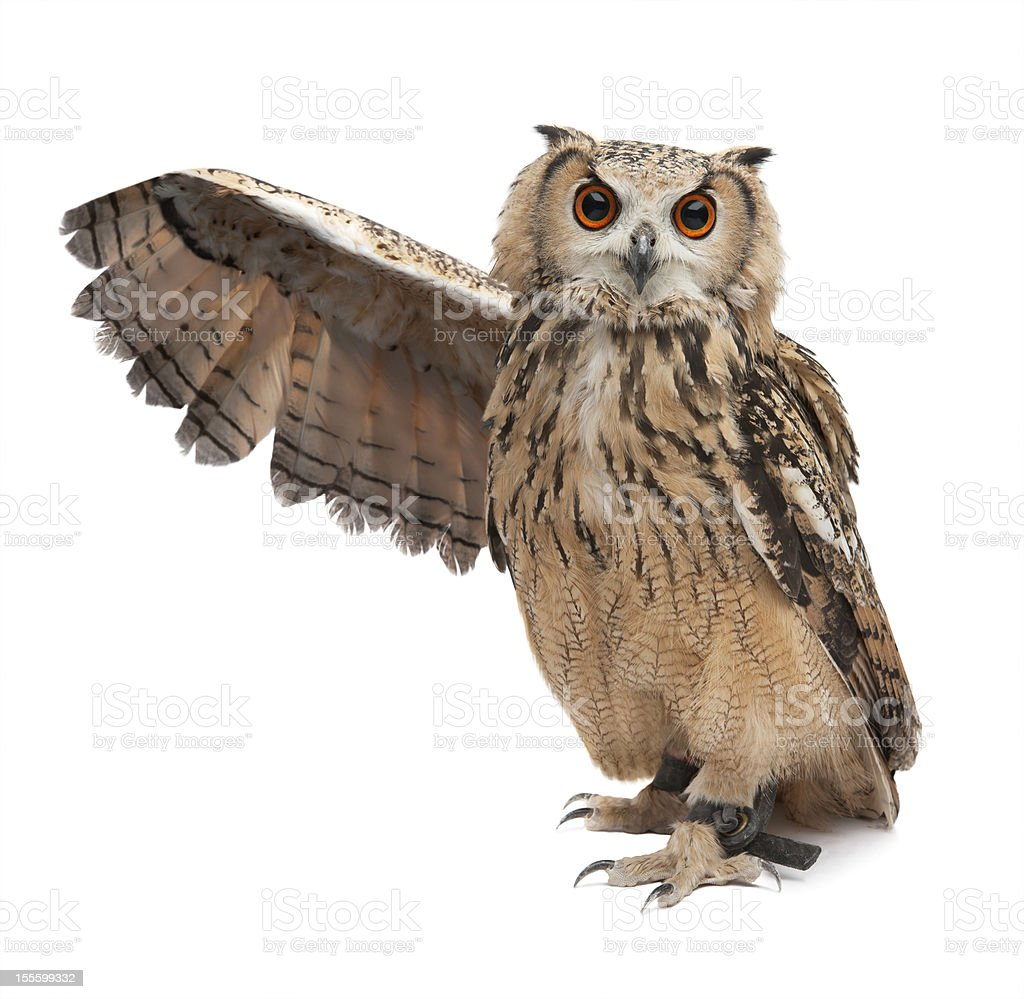 Wise owl stock photo