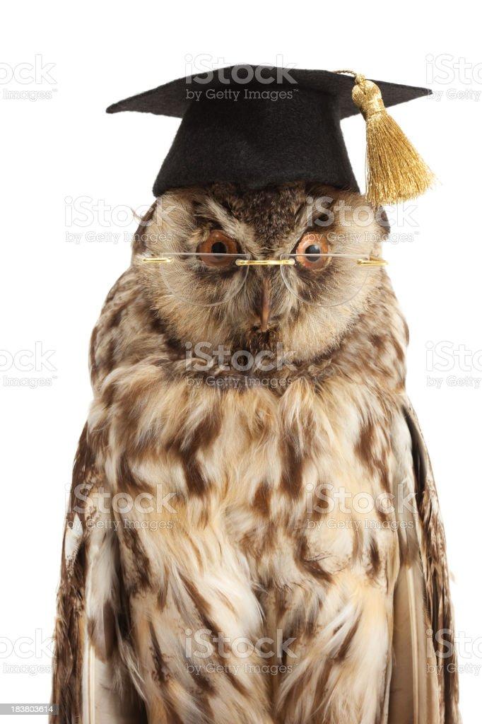 wise owl portrait stock photo