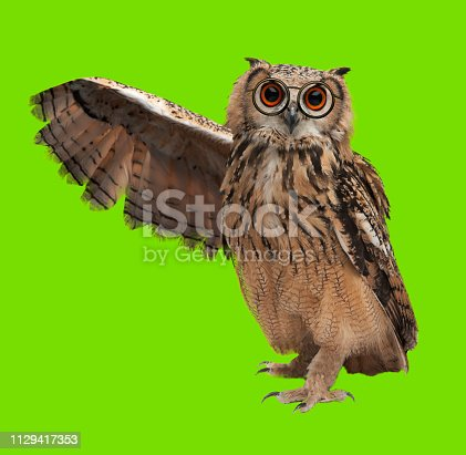 wise owl with glasses on chromakey