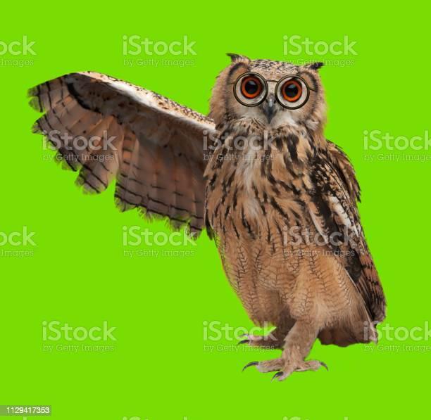 Wise owl with glasses on chromakey picture id1129417353?b=1&k=6&m=1129417353&s=612x612&h=zzbvxvzf6aib1d1aaonfya8jeonvykljm8xgwoylewu=