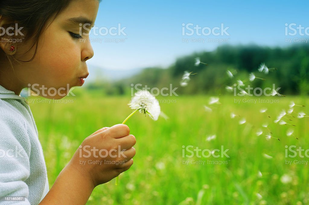 wishes A cute child blowing a dandelion. 2000-2009 Stock Photo