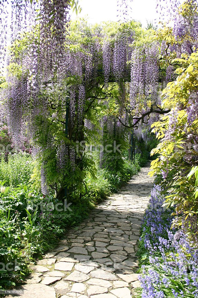 Wisteria 5 stock photo