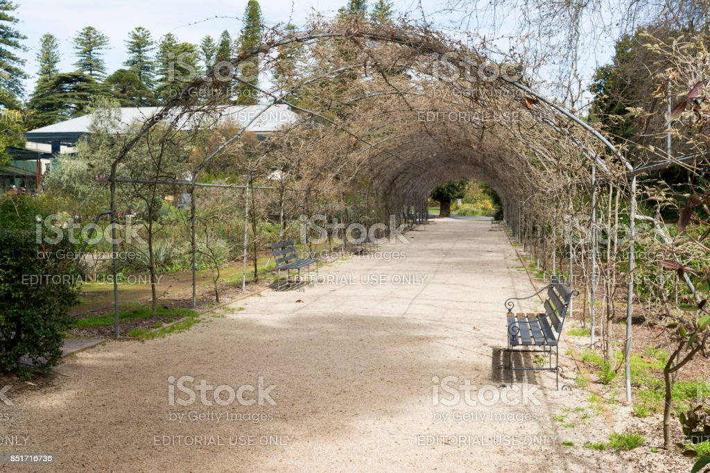 Wisteria Arbor (Off Season) stock photo