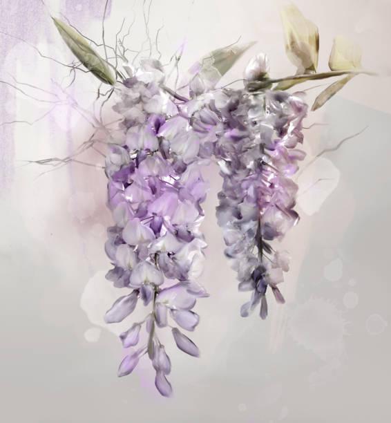 glyzinien blüten - aquarell - blauregen stock-fotos und bilder