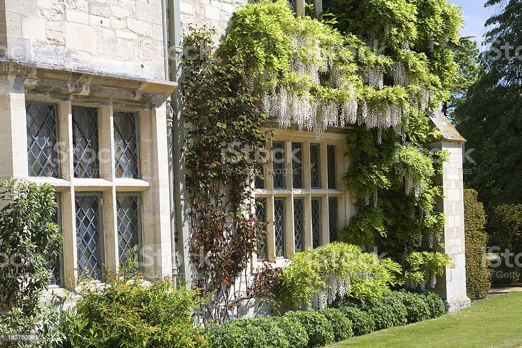 Wisteria growing around windows in a country manor royalty-free stock photo