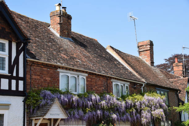 Wisteria growing on the front of the appropriately named Wisteria Cottage Sutton Courtney, United Kingdom - May 07 2018:   Wisteria growing on the front of the appropriately named Wisteria Cottage appropriately stock pictures, royalty-free photos & images