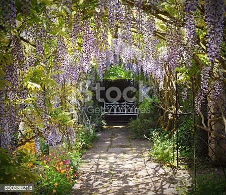Wisteria in full blossom  and trained over a garden seat