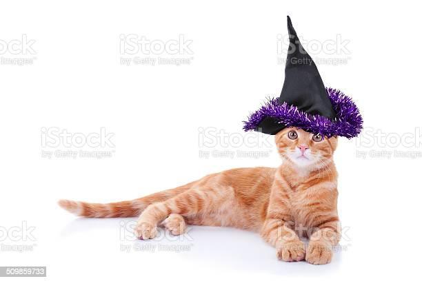 Witch cat picture id509859733?b=1&k=6&m=509859733&s=612x612&h=3q3uzkvt8 t5geu096axq0bxhtjdlkeebtcsjaq 3vi=