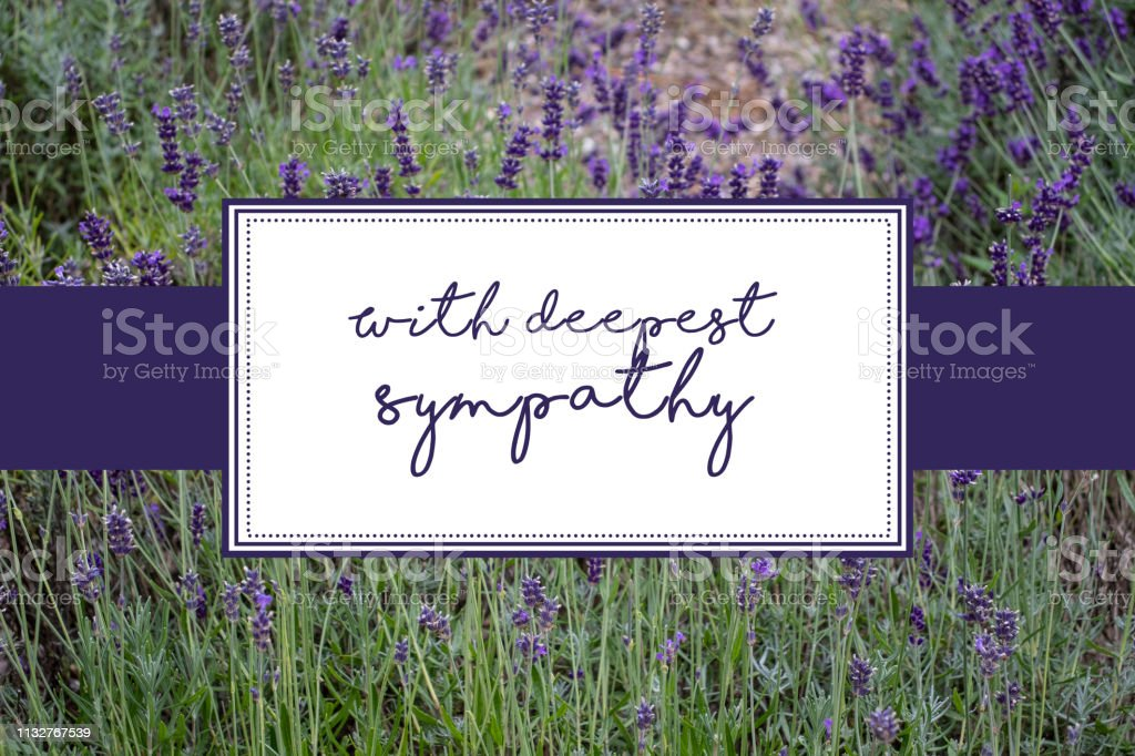 with deepest sympathy card with lavender background stock