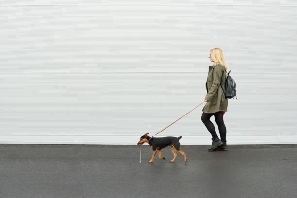 With dog girl walking with her dog picture id1000872846?b=1&k=6&m=1000872846&s=612x612&w=0&h=lfiof0eof9wkdkjsjgrapbuxupeqrfeyucicc0tn na=