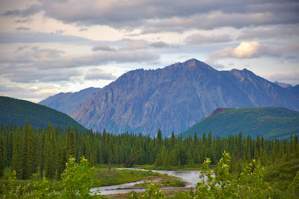With its huge mountains and surrounded by a wonderful biodiversity lies the Denali National Park and Preserve. River, trees and sunset. Landscape, fine art. Parks Hwy, Alaska, EUA: July 28, 2018 stock photo