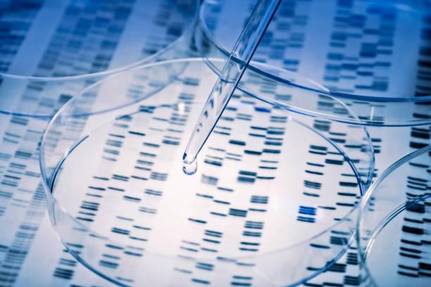 DNA mit Pipette und Petrischale – Foto