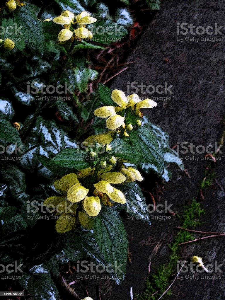 GARDEN SCENE With Yellow Flowers royalty-free stock photo