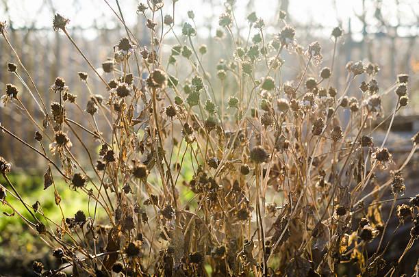 withered flores - planta morta imagens e fotografias de stock