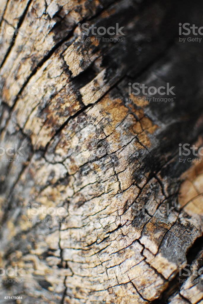withered grain stock photo
